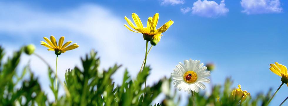 Tavaszi szűrőcsomag